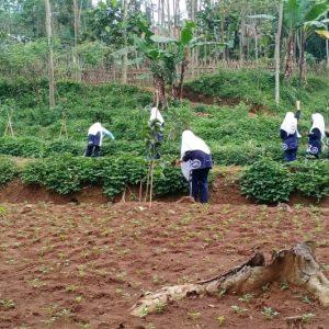 Santri Pondok Pesantren Darul Amanah Laksanakan Kegiatan Ekstrakurikuler Pertanian